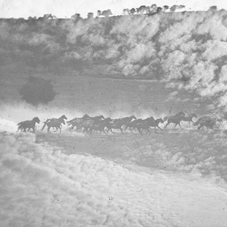 Palo Alto 'Running Herd with Superimposed Sky' © Kingston Museum and Heritage Service, 2010
